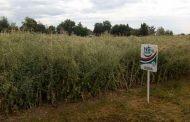 Привредна комора Војводине на Дану поља стрних жита, крмног биља и уљане репице