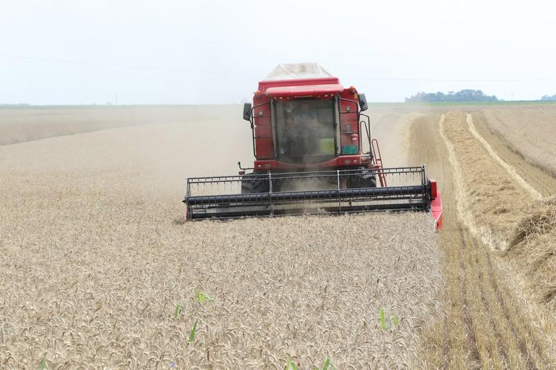"""Лист """"Пољопривредник"""": Вратити углед пшеници"""